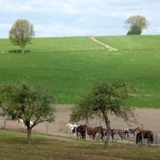 RonsdorfRundUm5080Marscheid20110416
